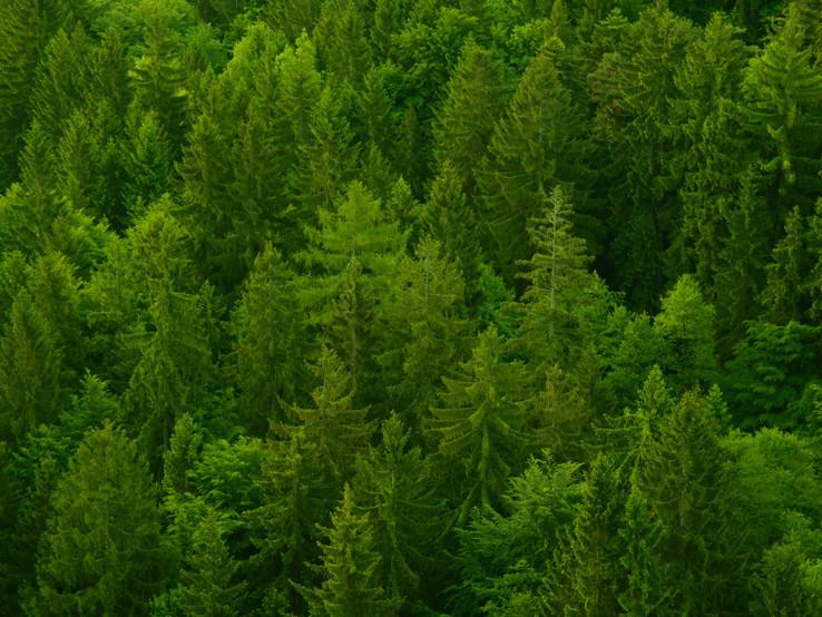 Veľkofatranské lesy