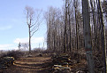 Malé Karpaty 12.3.2007