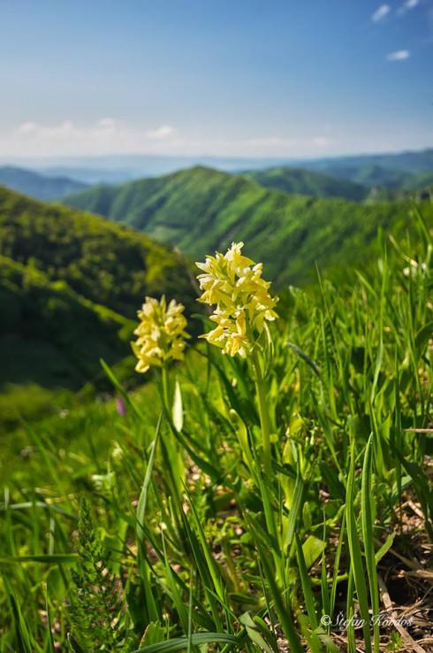 Orchidey nad Ramžinou