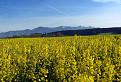 V krajine biopaliva