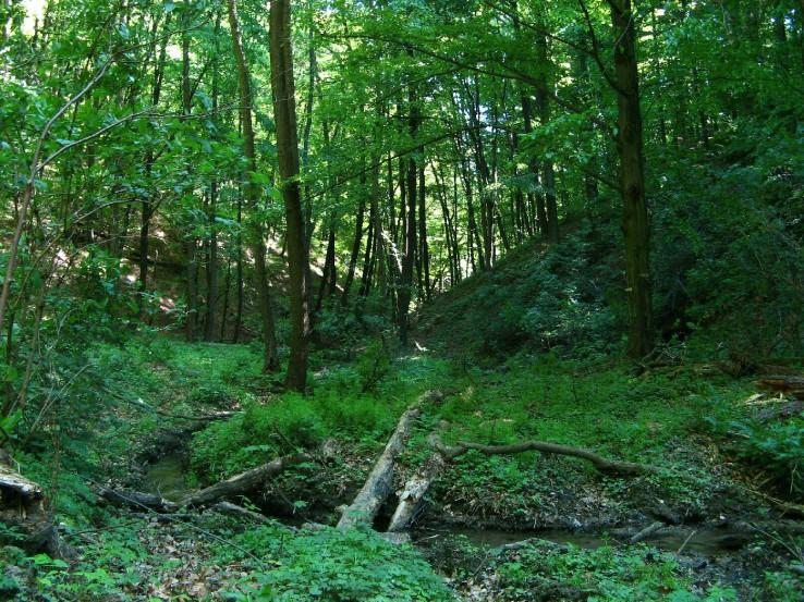 Lesné zákutie