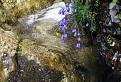 Jemná krása hôr / 1.1176
