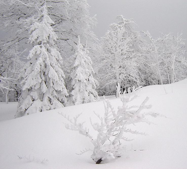 V bielej krajinke