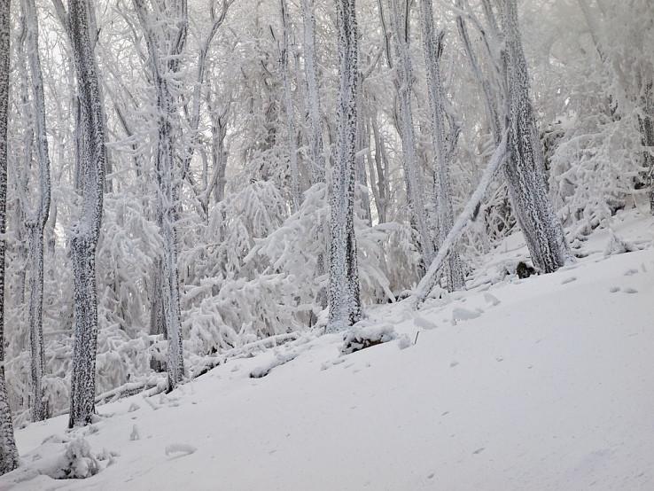 V lese pod Vápennou