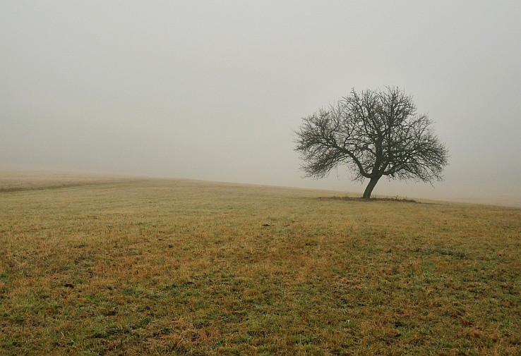 Stromovohmlová