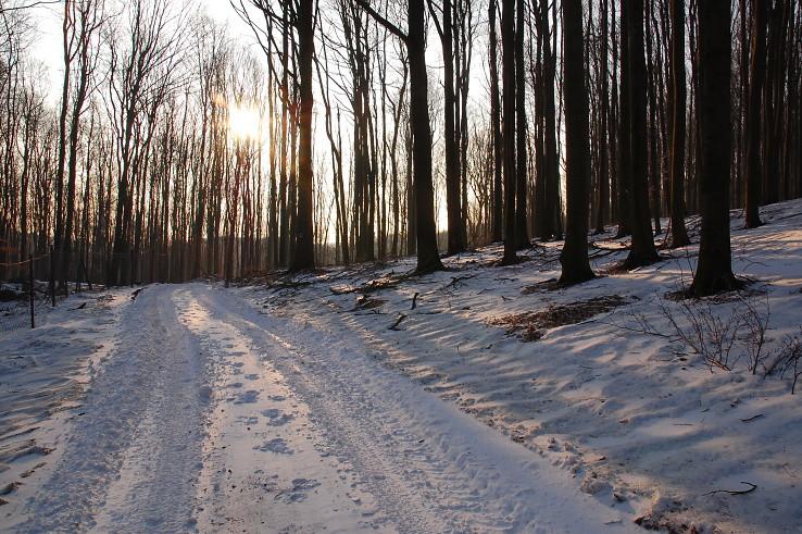 krásne, ranné chvíle v lese