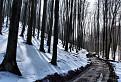 Lesná cesta II