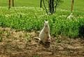úžasná klokania matka