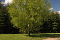 Jarná zelená / 1.0588