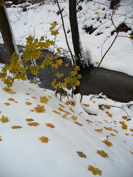 Listy na snehu