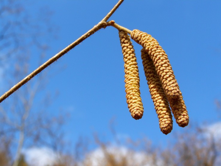 Jar už začína!