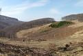 Dolina v Malých Karpatoch v okolí Modry
