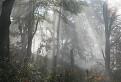 Džungla pod Nad Vyhorencom