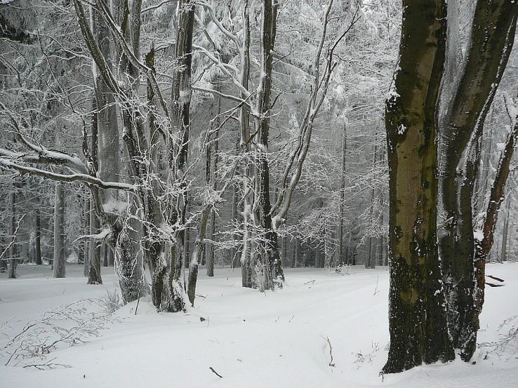 Neviditeľné stromy.