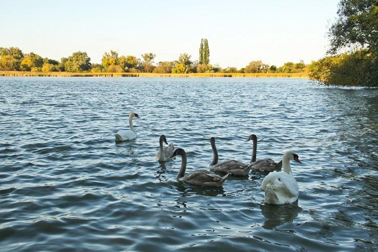 Trnavské rybníky