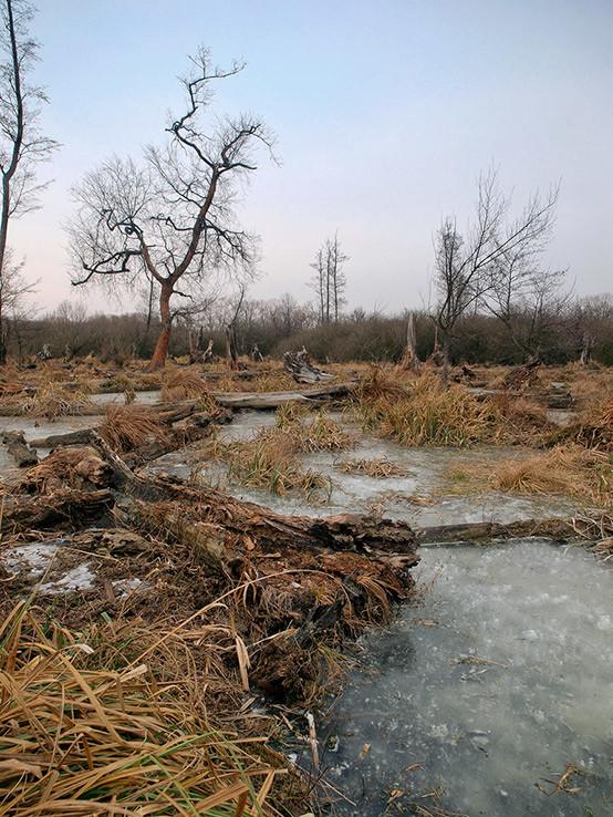 Najneprístupnejší les pri BA