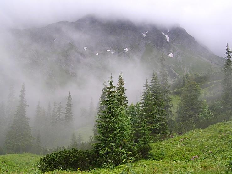 Rohace v hmle