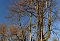 Pán strom