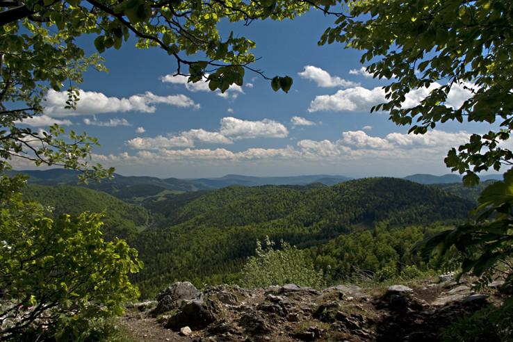 Pohľad z lesa