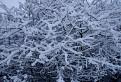 Snehobiela nádhera