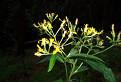 Rastlina (Bohužial neviem ako sa volá :-)
