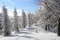 V kráľovstve snehu