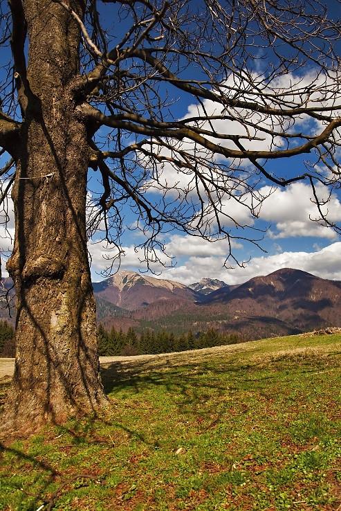 Ňáky strom a ňáke kopce :)