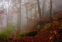 V Súľovskej hmle