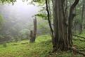 V pralese Javorníkov / 0.0000