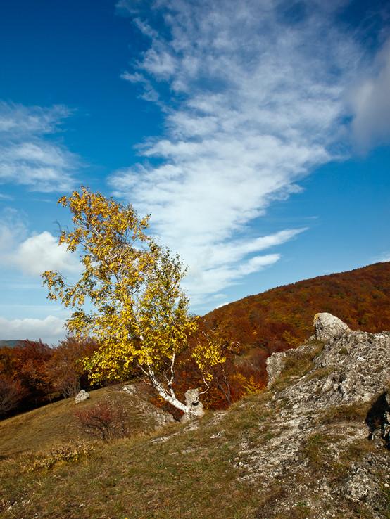 Malokarpatská breza