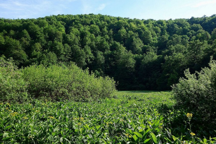 Terapia zelenou