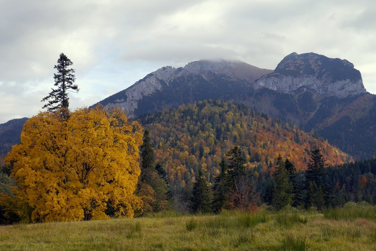 Nad Tatranskou Javorinou V