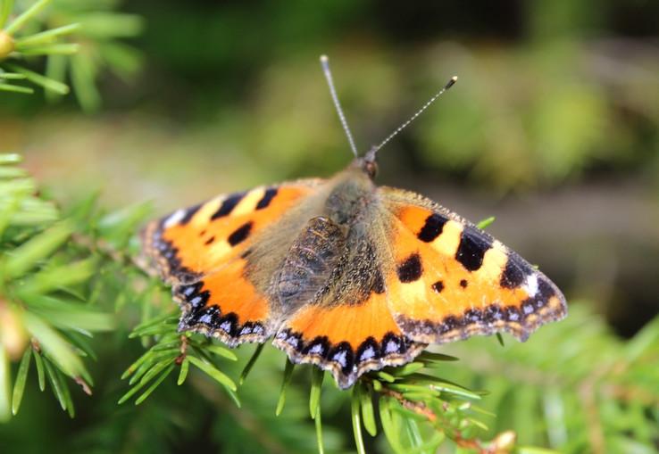 Ty motýľ môj, alias blízke stretnutie iného druhu /8/.